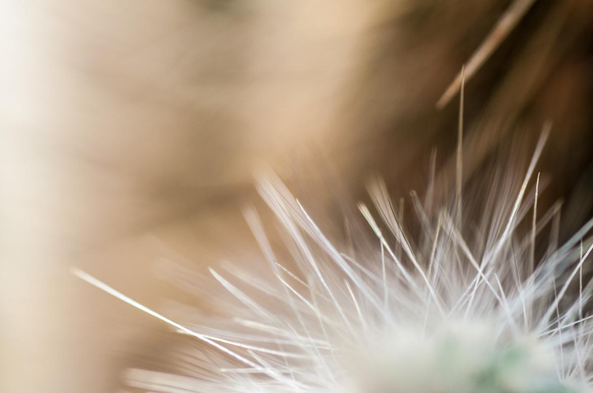 Nakonec se mi nejvíce líbí detaily špičky kaktusu, volím co nejvíce otevřeno uclonu (nenižší clonové číslo) aby hloubka ostrosti byla velmi malá - výsledkem je abstraktní nádech