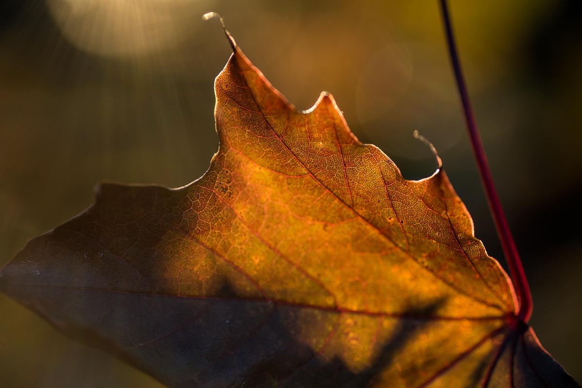 Podzimní paleta barev