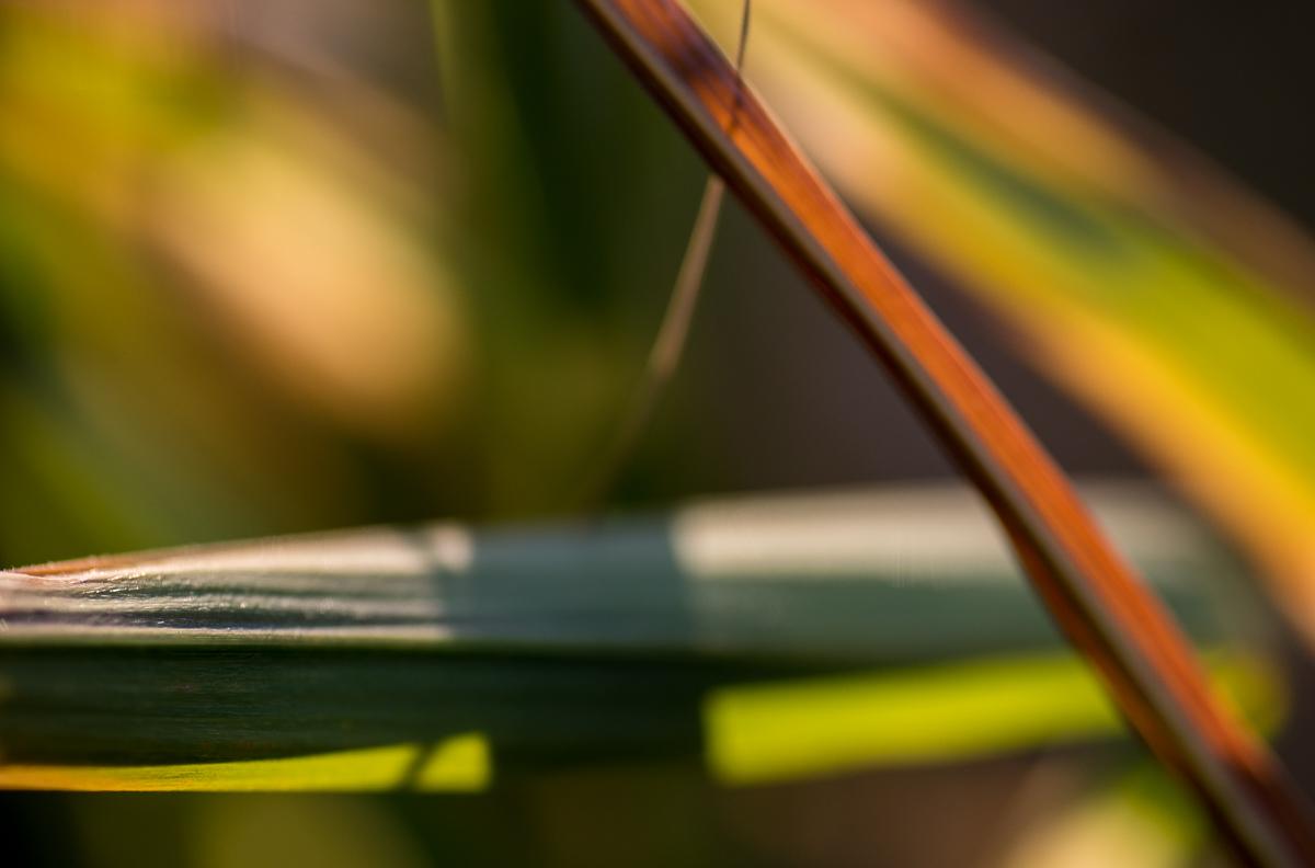 Abstrakce s trávou - můj oblíbený motiv