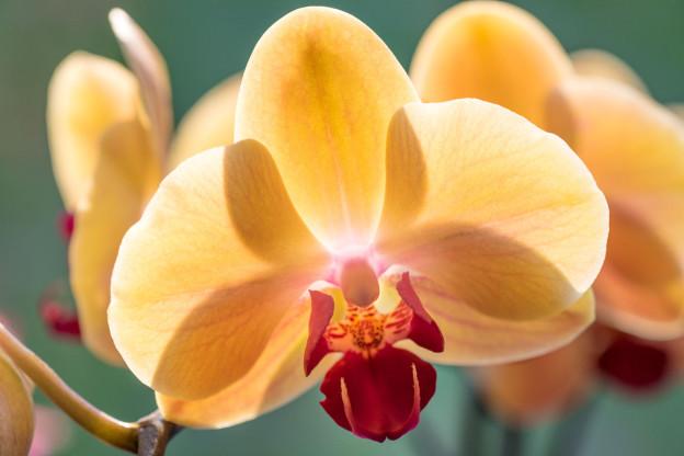 Orchideje-3