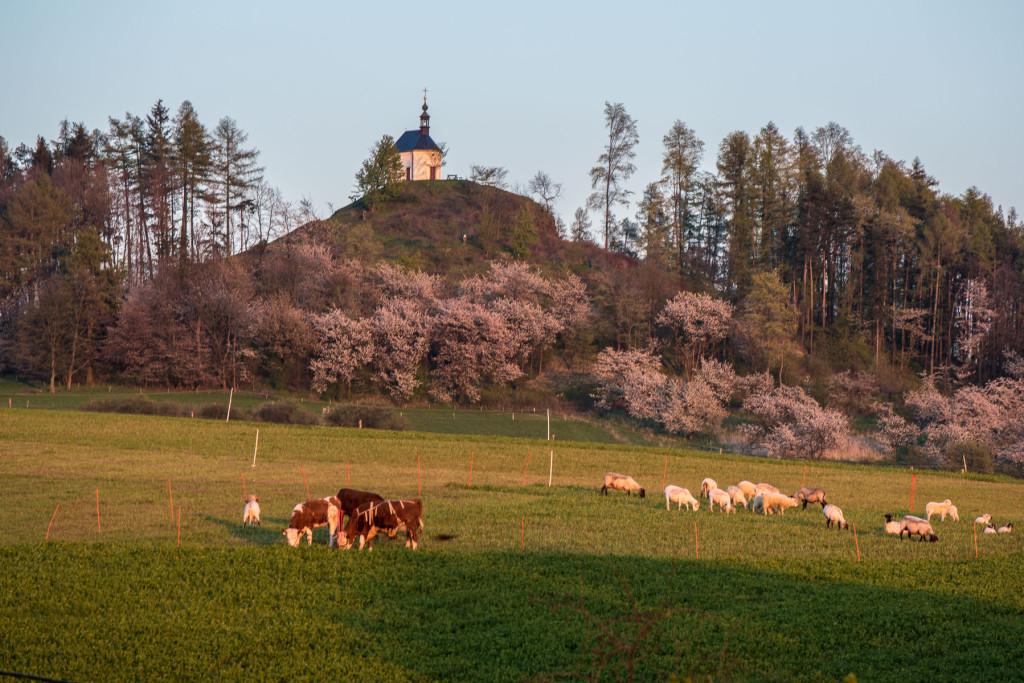 Vyskeř, Český ráj