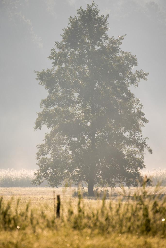 Ranní mlha v Českém ráji u Zakopané, Komárovský rybník