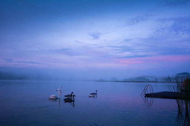 Komárovský rybník a labutě při západu slunce