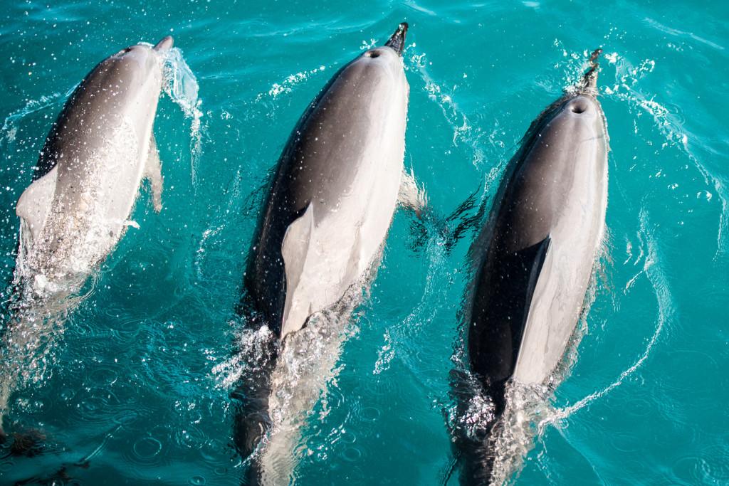 Delfini-25