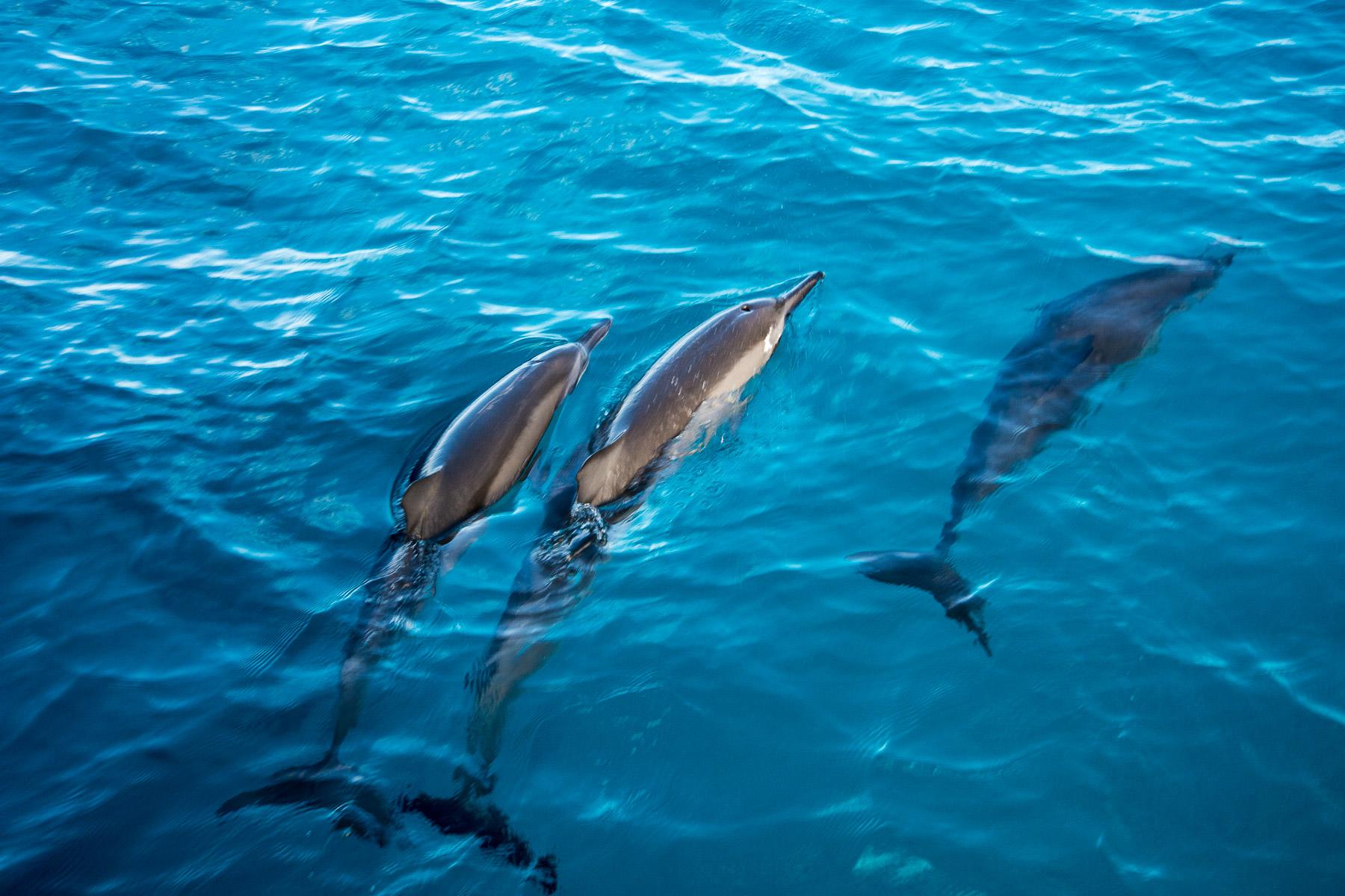 Focení na Havaji (díl 2): jak se fotografují delfíni zkatamaránu