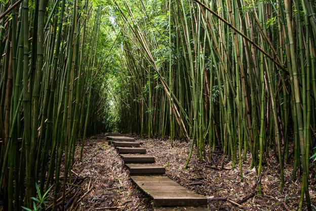 Bambusový les na pěší turistické trase Pipiwain Trail