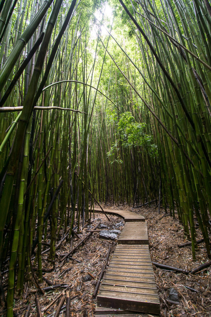 pipiwai-trail_havaj_hawaii-maui-12