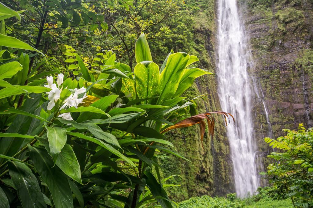 pipiwai-trail_havaj_hawaii-maui-14