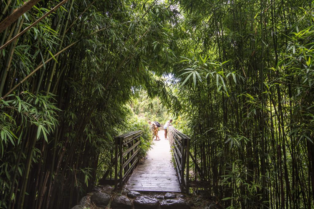 začátek bambusového lesa