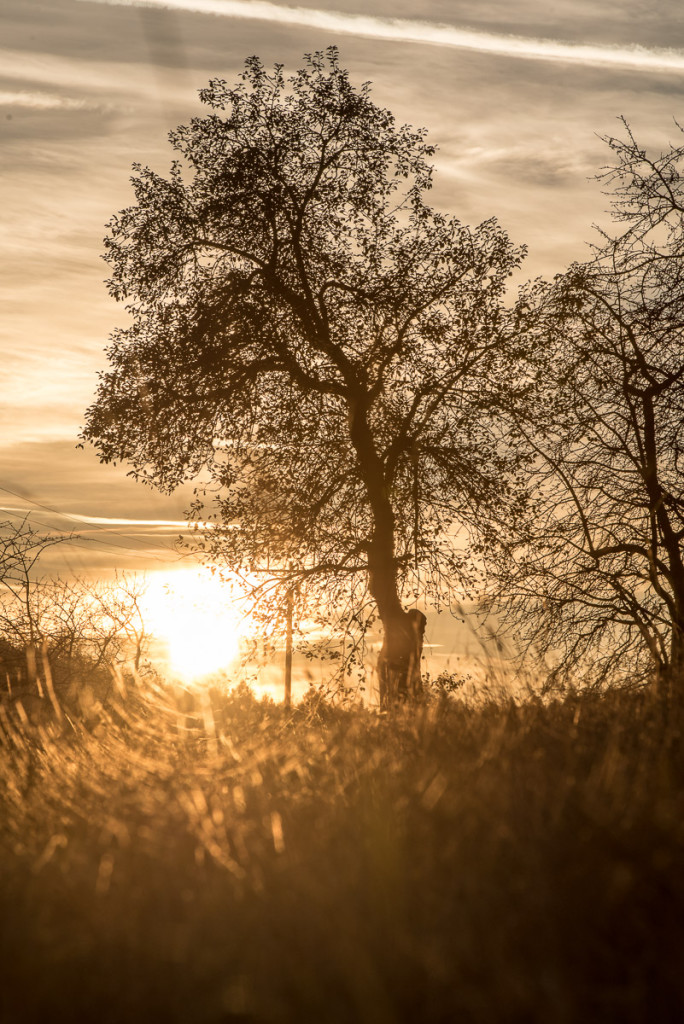 Louka a strom v protislunci