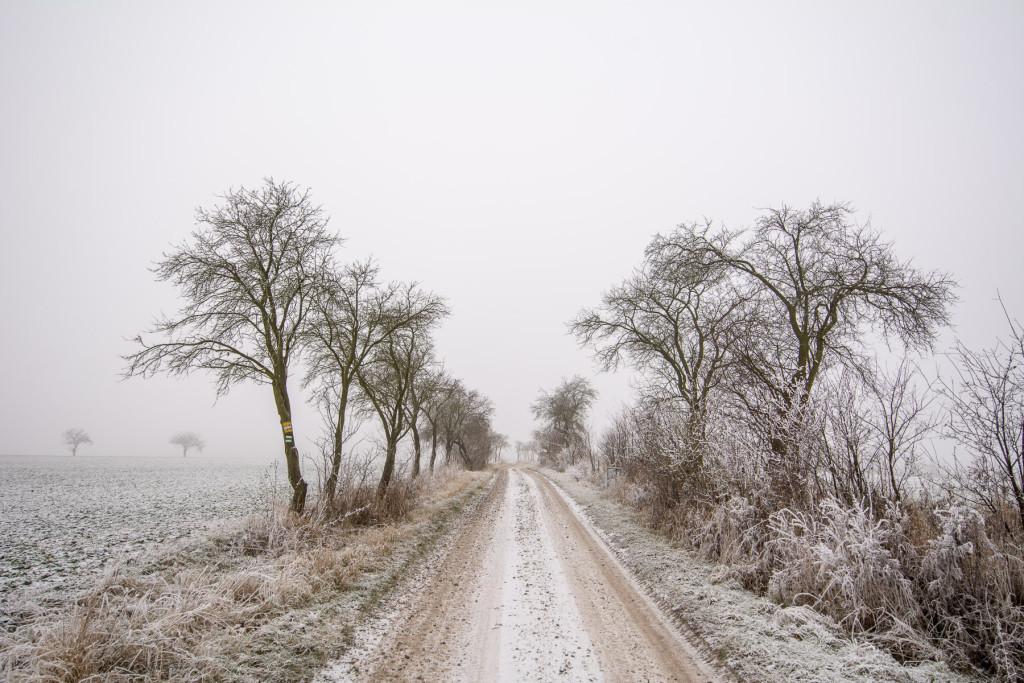 Zimní pole Českého ráje
