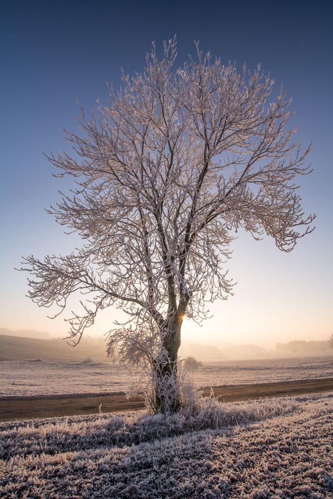 Namrzlý strom kousek od Semil