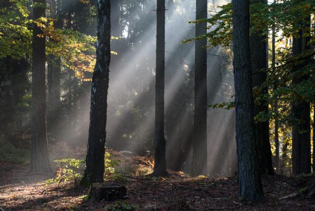 Jak se fotí podzim v Prachovských skalách v Českém ráji (při ranní mlze)