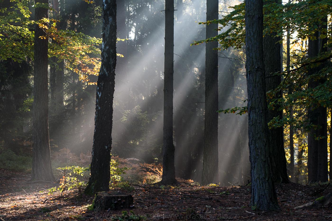 Mlha v Prachovských skalách