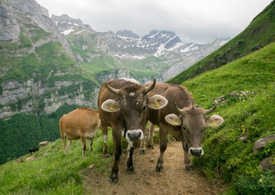 Appenzell_170612_013