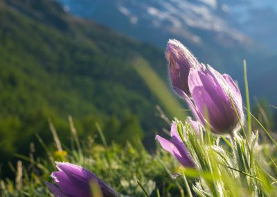 Matterhorn_170607_101
