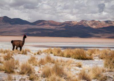 Altiplano_Uyuni_140104_024-2