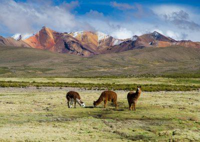Chile-krajina-Bacovsky-6