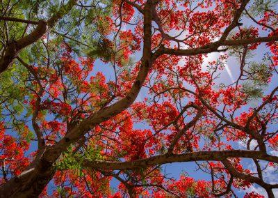 Havajske-ostrovy-Havaj-krajina-Bacovsky-12
