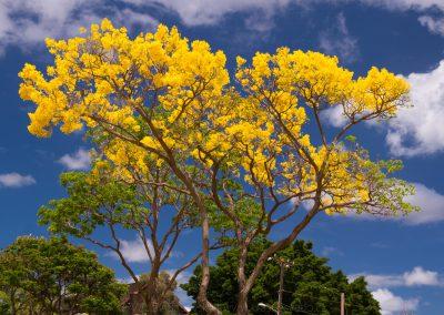 Havajske-ostrovy-Havaj-krajina-Bacovsky-13