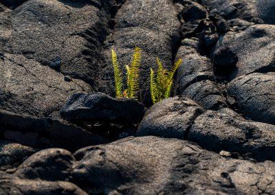 Havajske-ostrovy-Havaj-krajina-Bacovsky-68