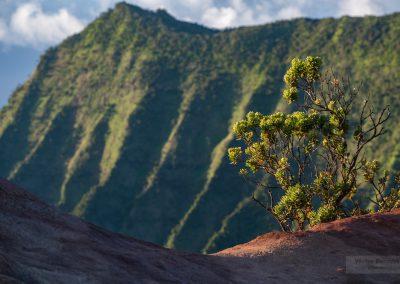 Havajske-ostrovy-Havaj-krajina-Bacovsky-7