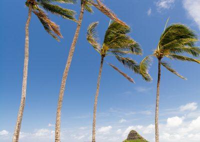 Havajske-ostrovy-Havaj-krajina-Bacovsky-80