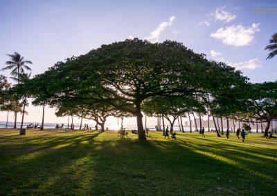 Havajske-ostrovy-Havaj-krajina-Bacovsky-98