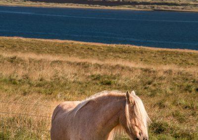 Island-krajina-Bacovsky-47