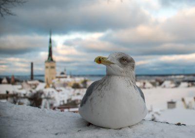 Tallinn_161111_078