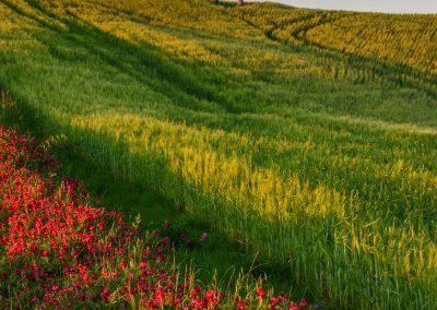Toskansko-krajina-Bacovsky-15