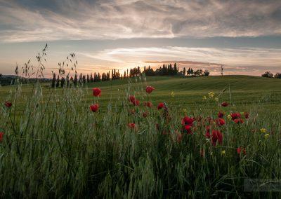 Toskansko-krajina-Bacovsky-9