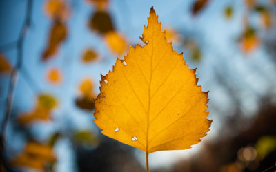 5 Tipů jak na fotografování podzimních detailů v lese