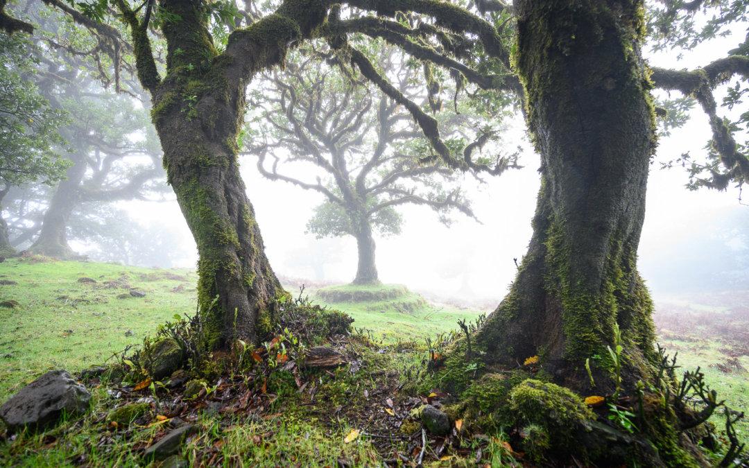 Mlžný les jak zpohádky – Fanal na ostrově Madeira